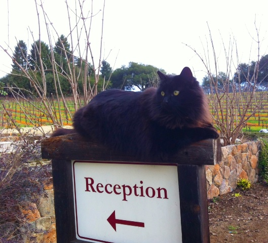 Chloe is our chief greeter and a champion rodent killer in our vineyards.
