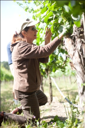 Merry thinning fruit at Meredith Estate