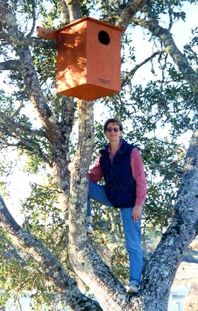 Merry inspecting owl box at Meredith Estate Vineyard