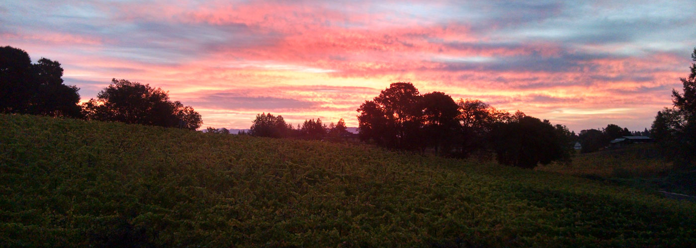 Sunrise at Coopersmith Vineyard