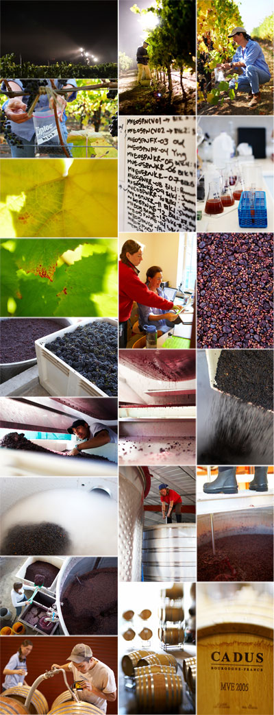 Winemaking collage